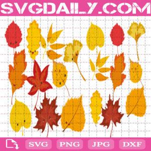 Autumn Leaves Svg Bundle Free, Fall Leaves Svg Free, Leaf Svg Free, Autumn Svg Free, Clip Cut File Svg, File Svg